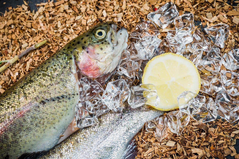 Fischmaster Fischshooting-212